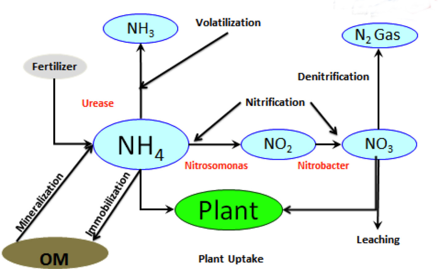 Reachout n loss and stabilizers cva coop nitrogen cycle pooptronica Choice Image