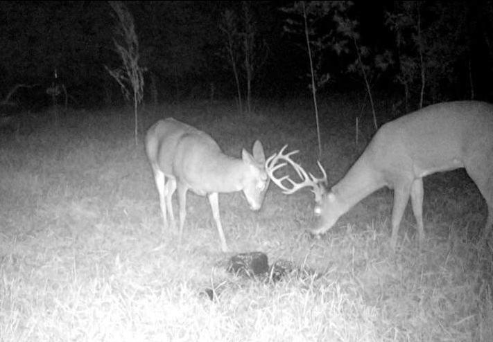 bucks black and white
